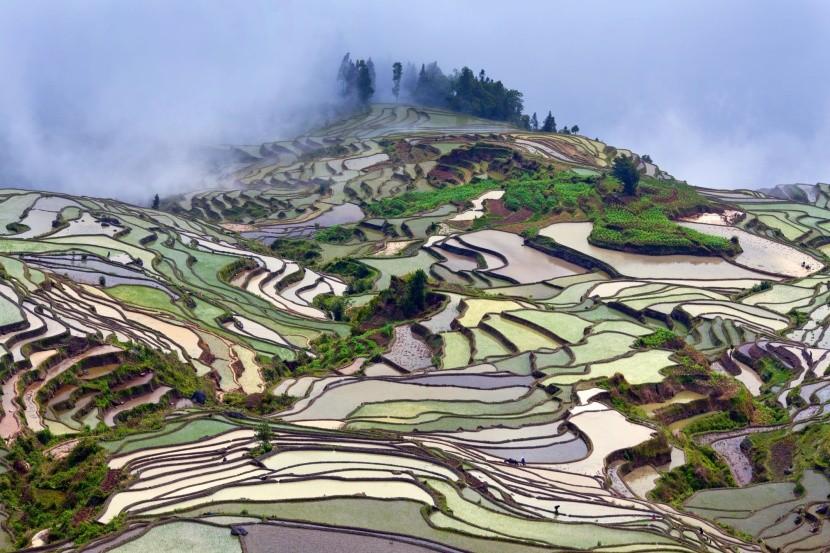 Ryžové terasy v provincií Yunnan, Čína