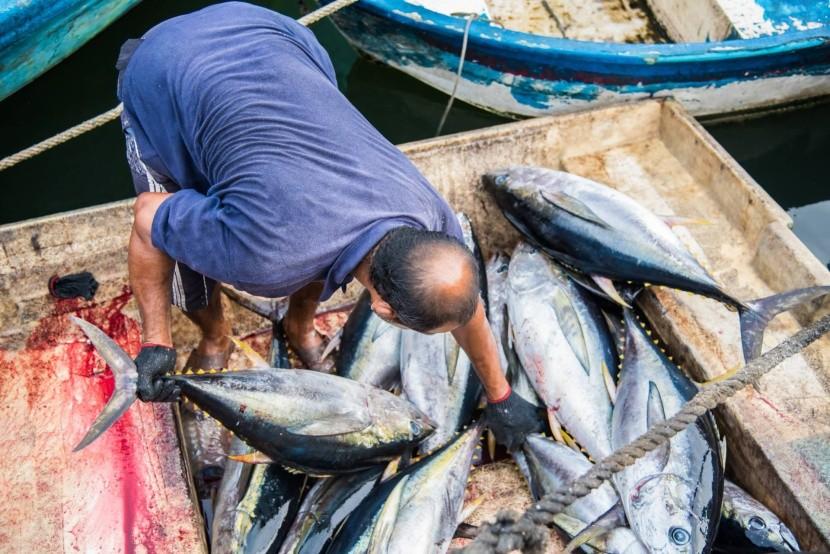Čerstvé ryby pre trh v Male