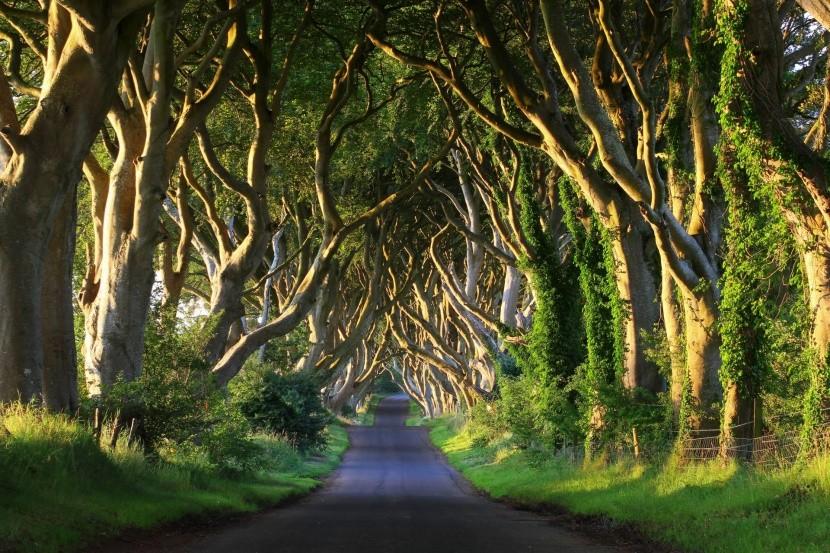 The Dark Hedges, Severné Írsko