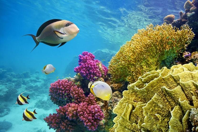 Podmorský svet, Červené more, Egypt