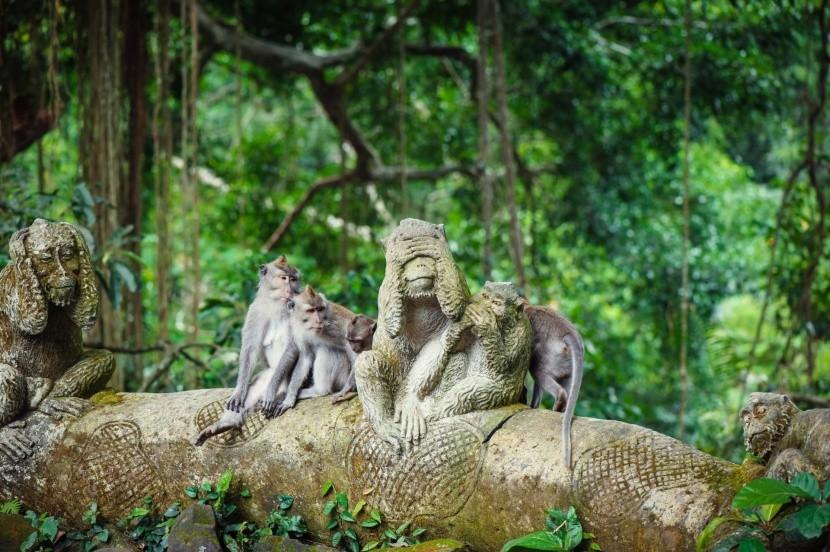 Všadeprítomné opice