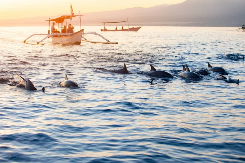 Možnosť vidieť delfíny