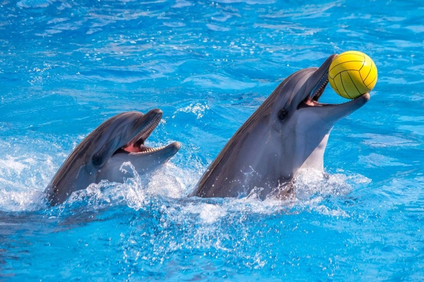 Delfinárium v Hurghade