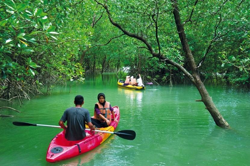 Mangrovové lesy v Bang Rong