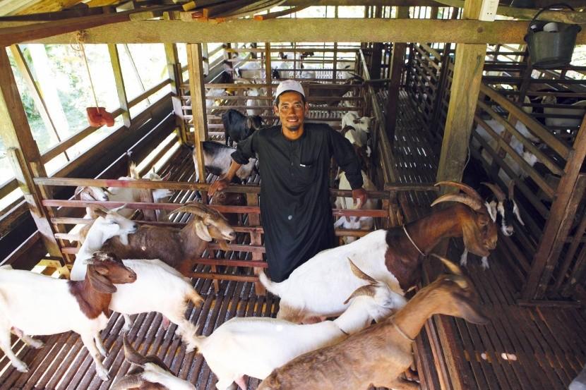 Kozia farma v Bang Rong