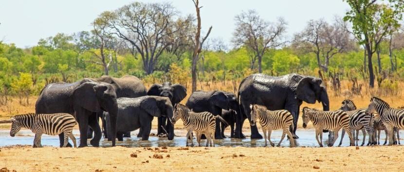 Národný park Hwange, Zimbabwe