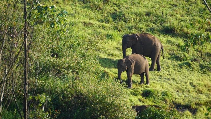 Národný park Periyar, Indie