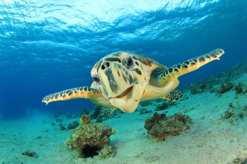 Stretnutie s korytnačkou v Červenom mori