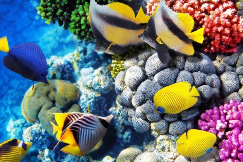 Život v Červenom mori