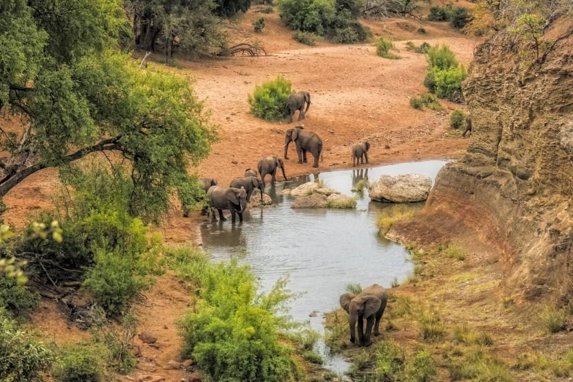 Krugerov národný park v Juhoafrickej republik