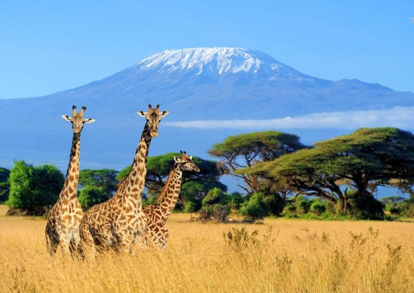 Safari v Keni