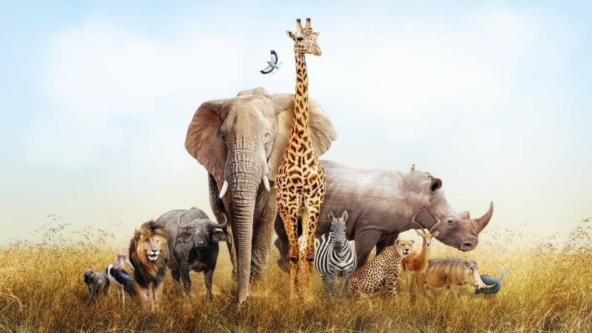 Zvieratá Afriky - stretnete ich všetky?