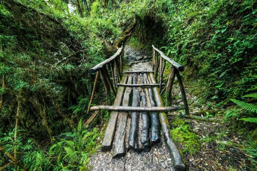 Cesta peruánskym pralesom