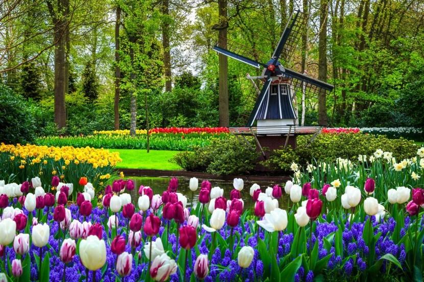 Kvetinový park Keukenhof v Holandsku