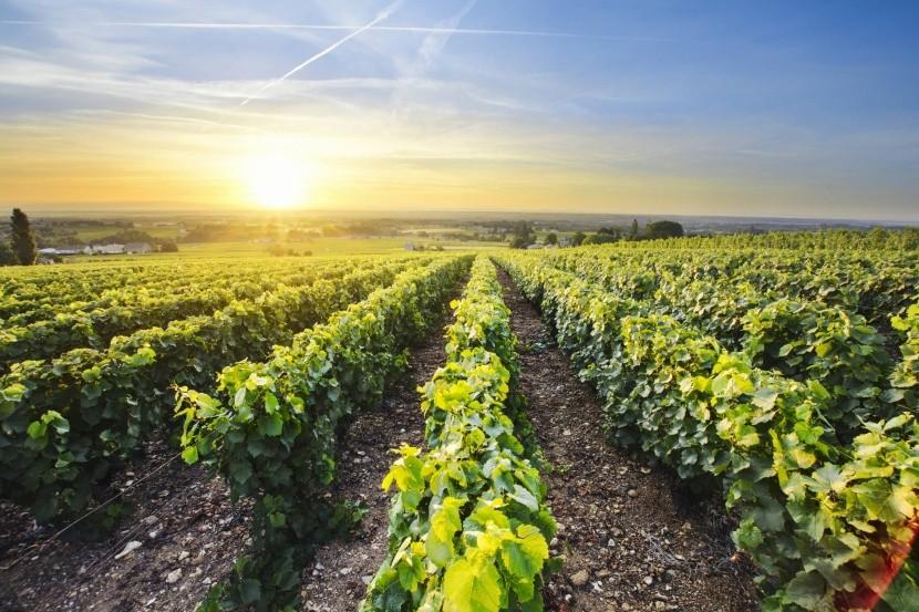 Východ slnka v Beaujolais