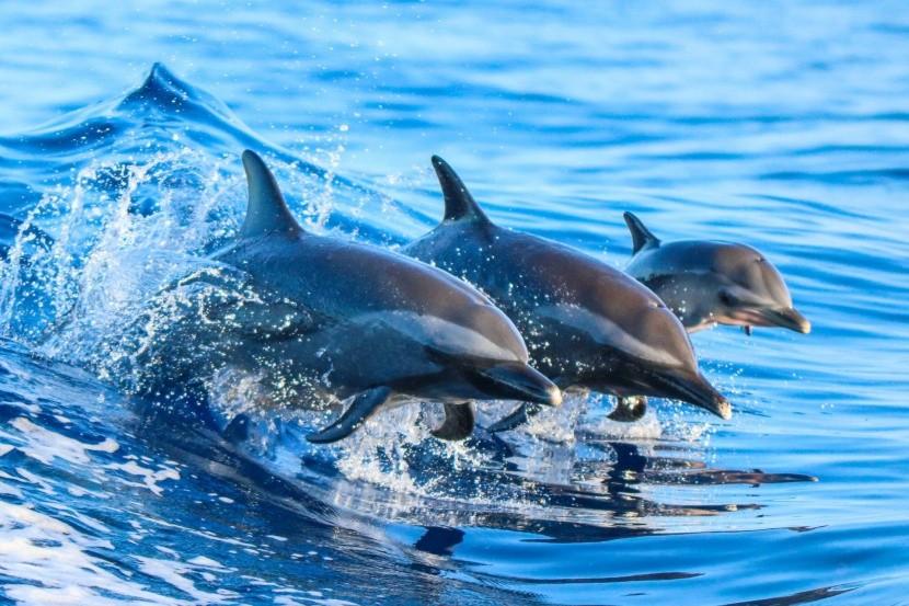 Delfinárium na ostrove Moorea