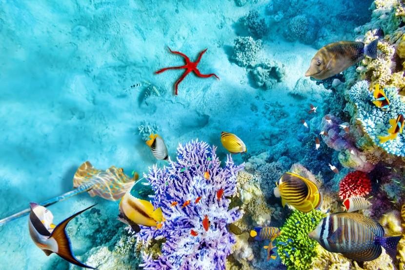 Podmorský život na Maldivách