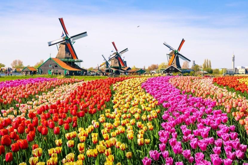 Tulipánové polia, Holandsko