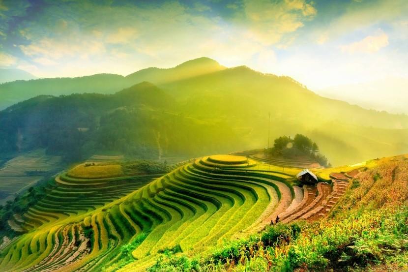 Ryžové terasy vo Vietname