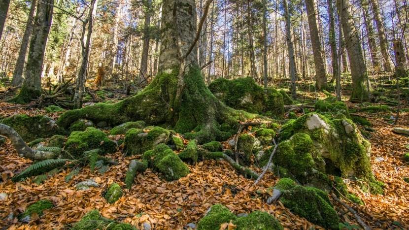 Prales v regióne Kočevje