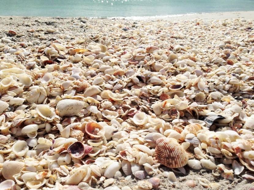Sanibel Island, Florida, USA