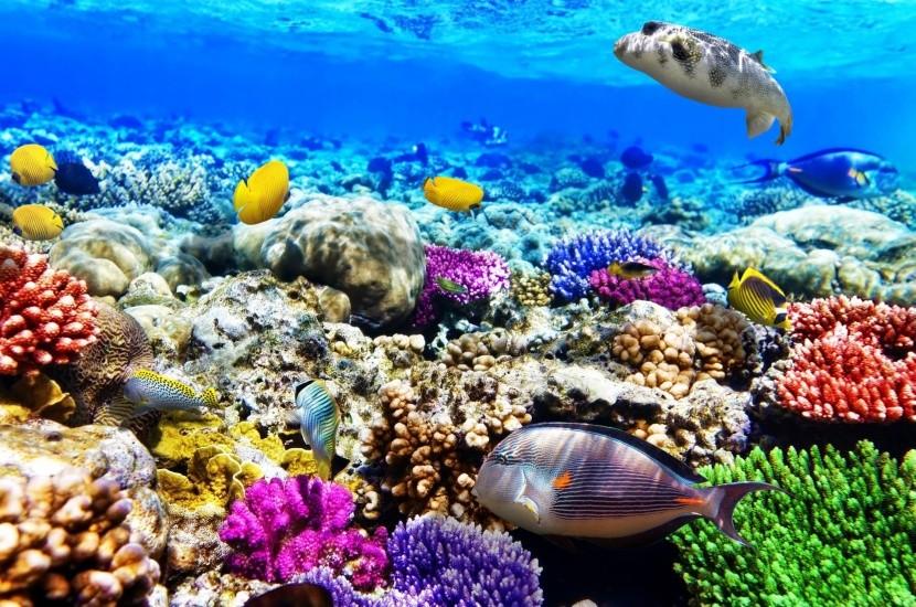 Farebný vodný svet v Egypte