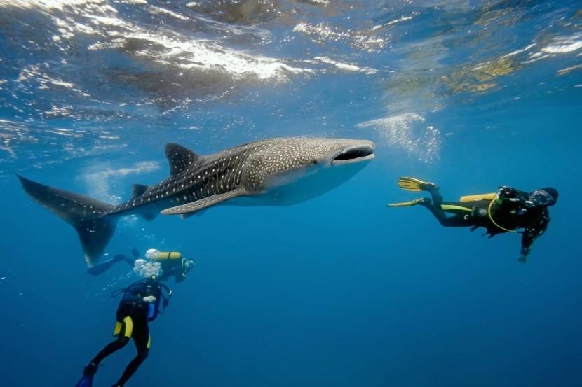 Fantastické potápanie na Maldivách