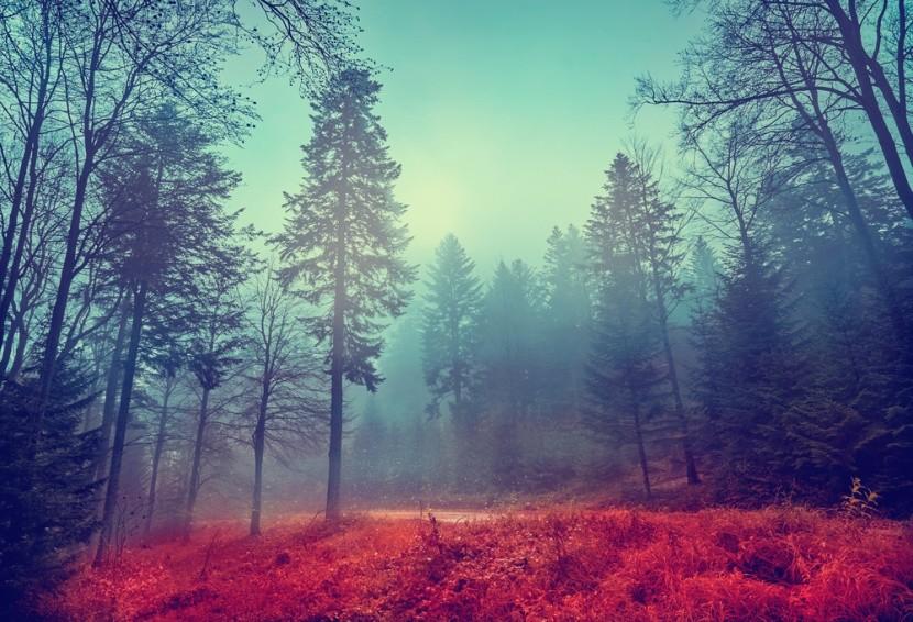 Tajomný les v Poľsku