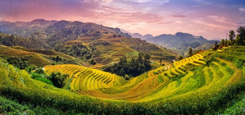Vietnamské ryžové polia