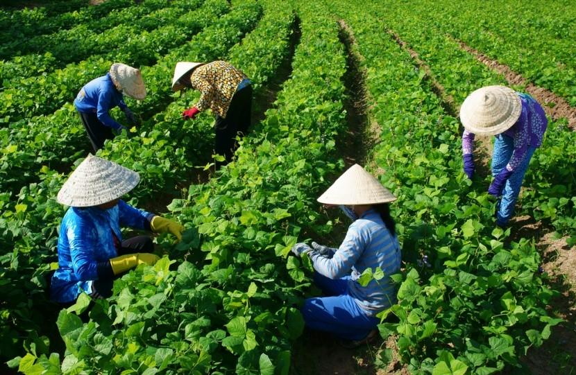 Vietnamskí farmári vedia čo jedia a prečo