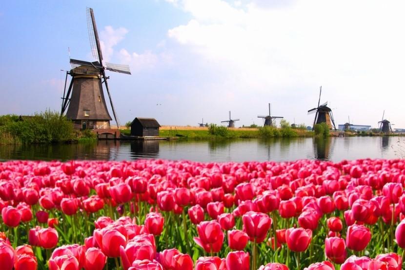 Veterné mlyny a tulipány v Holandsku