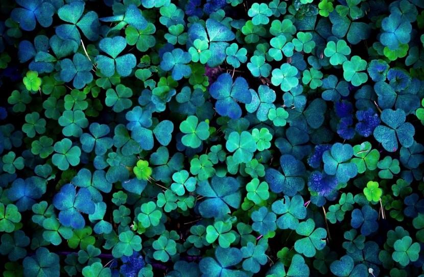 Farbou Írska aj Dňa svätého Patrika bola modr