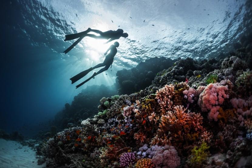 Korálový útes v Červenom mori, Egypt