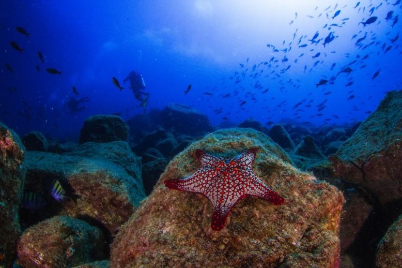 Podmorský svet okolo brehov Panamy