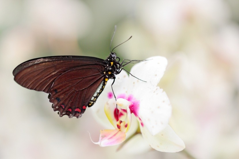 Scéna živej prírody: Divoko rastúca orchidea