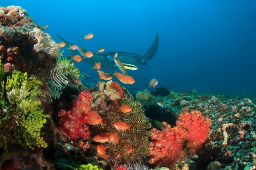 Ningaloo Marine Park, Austrália
