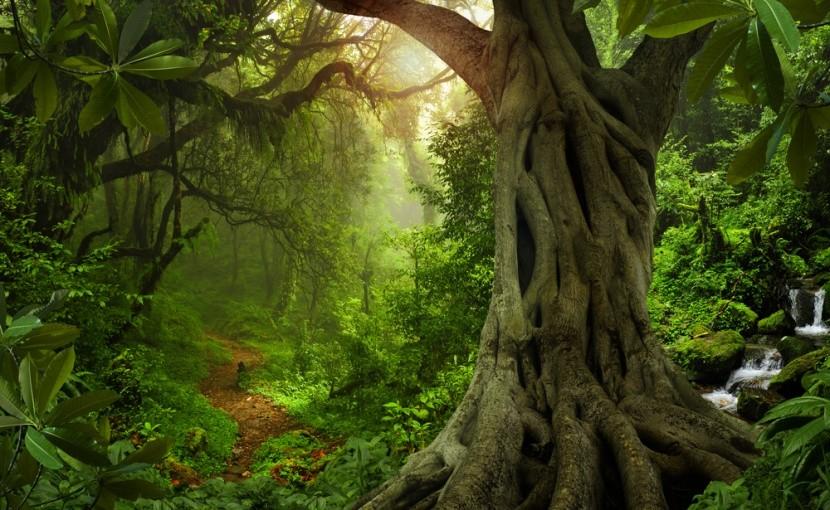 Naše vnúčatá možno dažďový prales už neuvidia