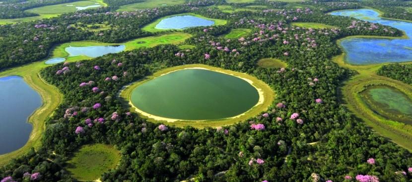 Močiare Pantanal, Brazília